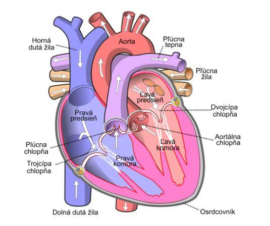 Srce avysoky krvny tlak